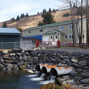 pillar-creek-hatchery-square